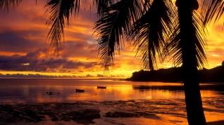 gorgous-palm-sunset