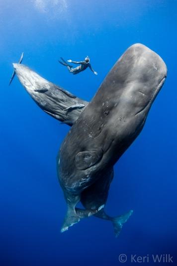 sperm-whales